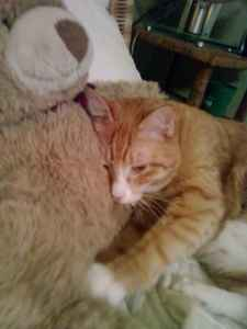 bedtime, makin biscuits on his teddy bear