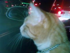 tonight on the way home from the vet, checkin out the scenery from the S2000